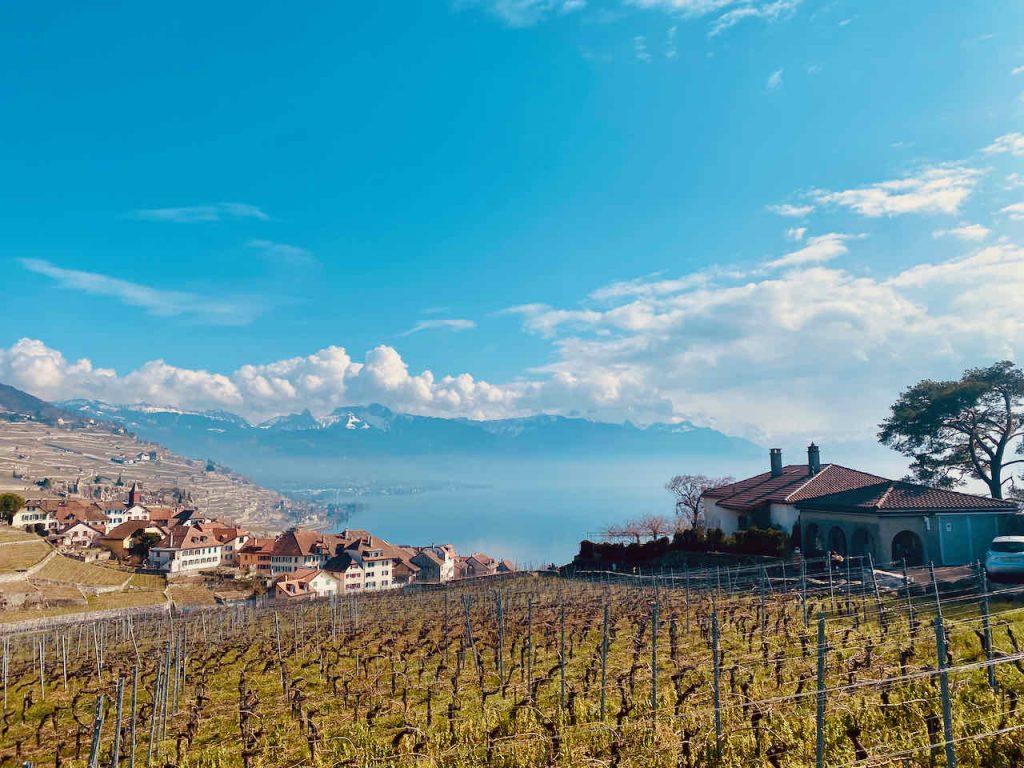 Unesco Lavaux Vineyard Terasses_103