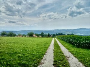 Read more about the article Lindenberg – hiking on the Swiss plateau