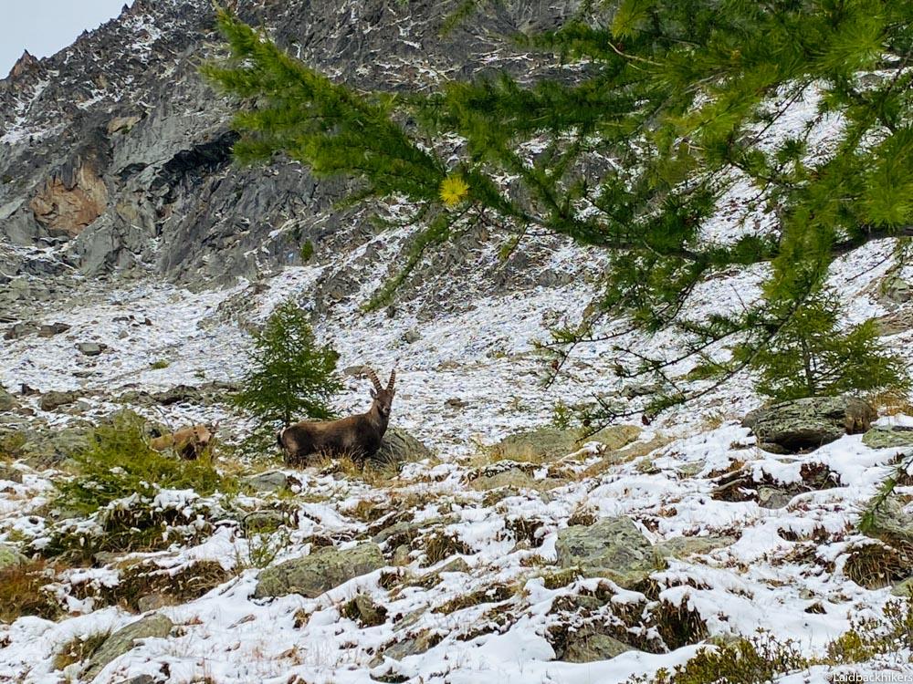 Swiss_Animals_Hiking
