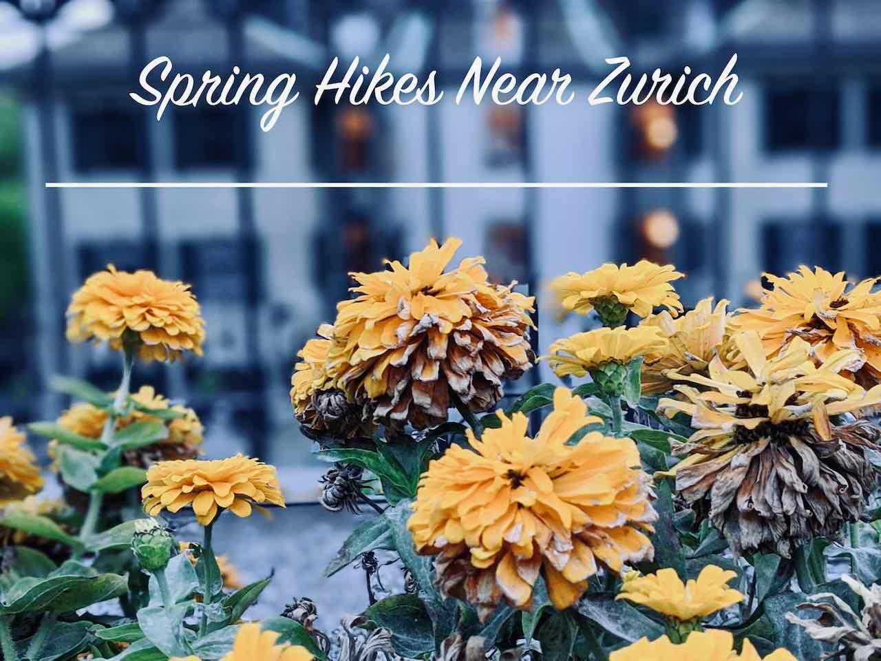 Best Spring Hikes near Zurich